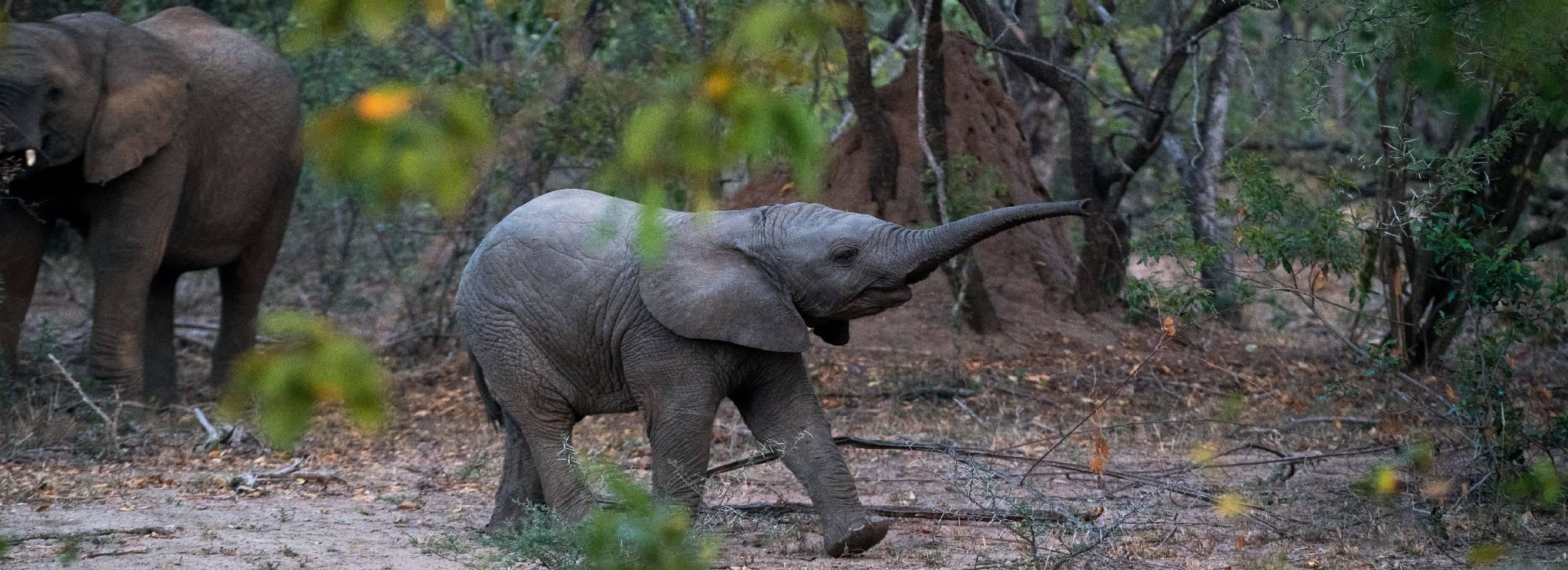Cooperación en el voluntariado de elefantes