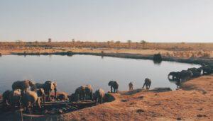 Cuiado de elefantes en el Voluntariado