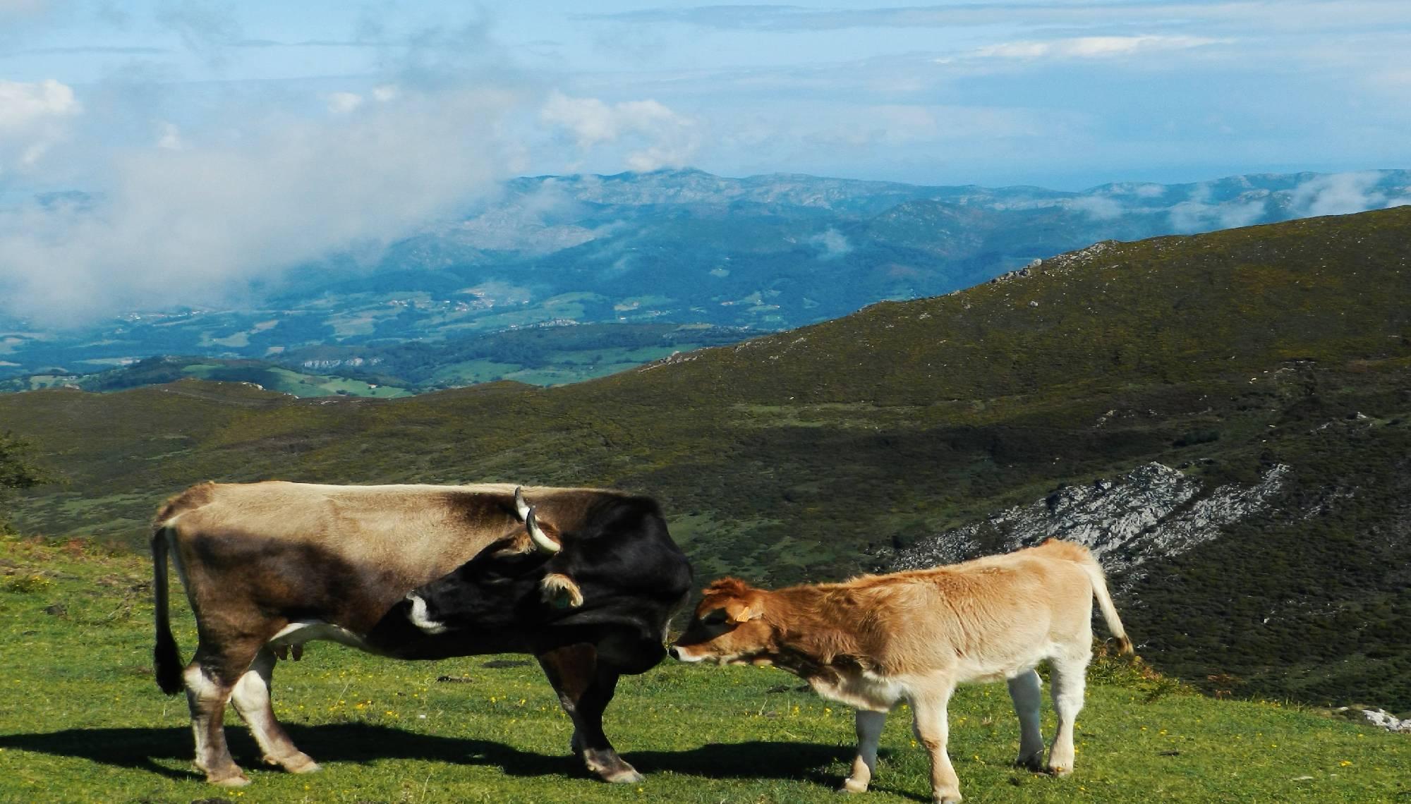 Depura tu organismo en Asturias