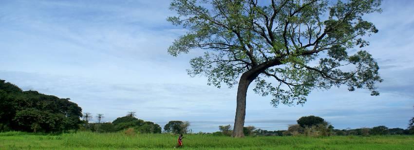 naturaleza en gambia