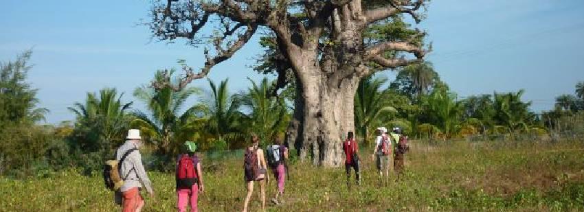 Arboles centenarios en áfrica